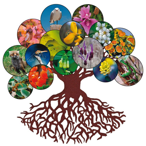 Abierto el plazo para el Máster Oficial en Técnicas de Conservación de la Biodiversidad yEcología