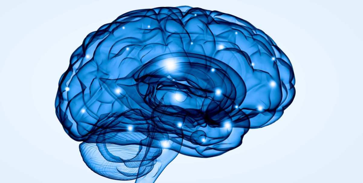 Los neurólogos españoles están a la cabeza de los avances sobre laepilepsia