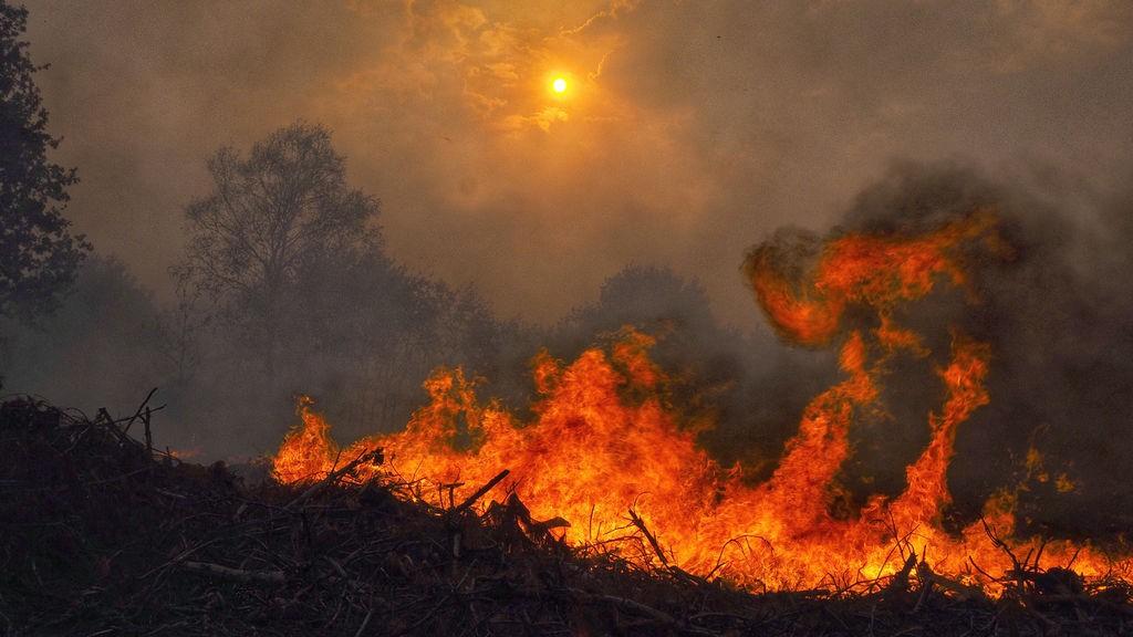 ¿Qué hay en el humo de los incendios forestales y por qué es tan malo para los pulmones? | TheConversation