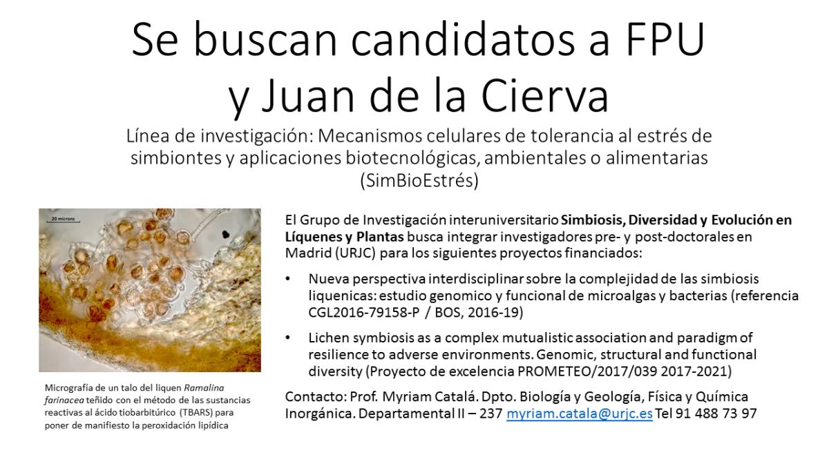 Se buscan candidatos para contratos Juan de la Cierva: línea de investigación en mecanismos celulares de la simbiosis y la tolerancia alestrés