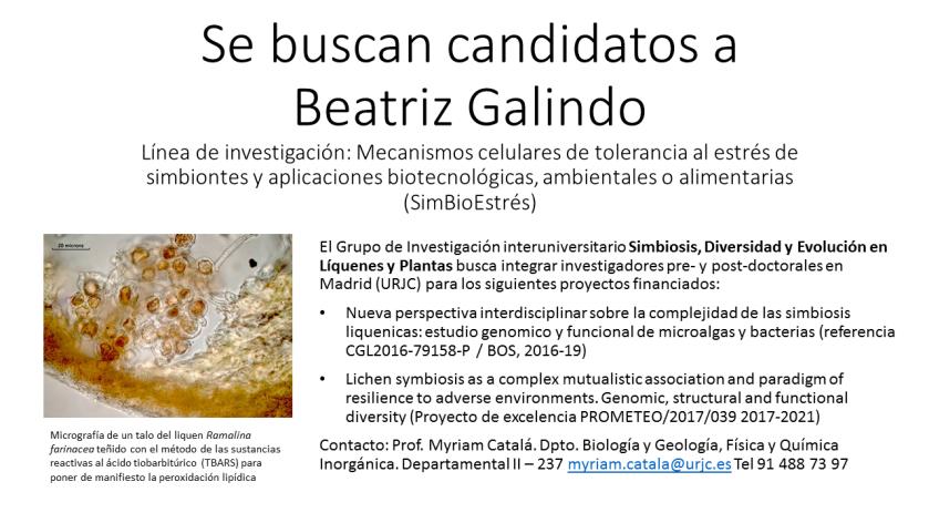 Cartel búsqueda candidatos Simbioestrés Beatriz Galindo.png