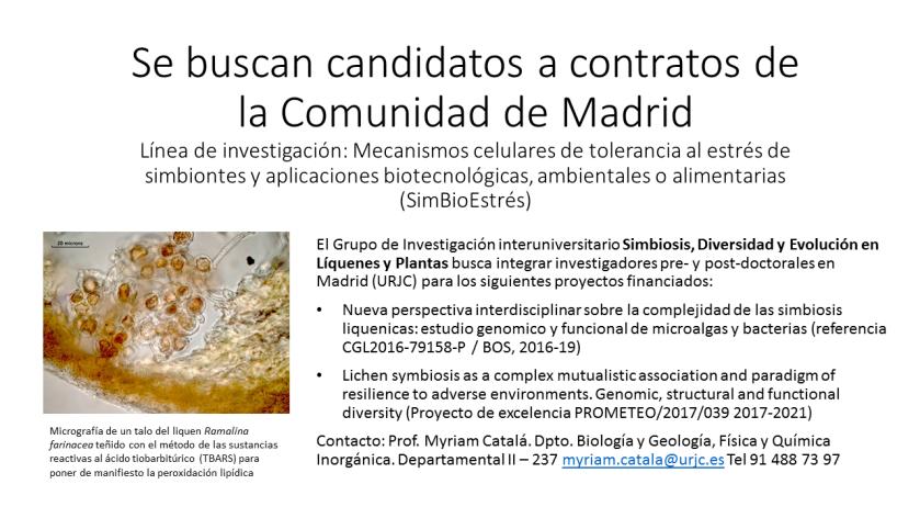 Candidatos contratos CM