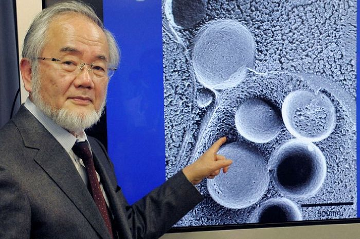 "Curso ""Autophagy: Research Behind the 2016 Nobel Prize in Physiology or Medicine"""