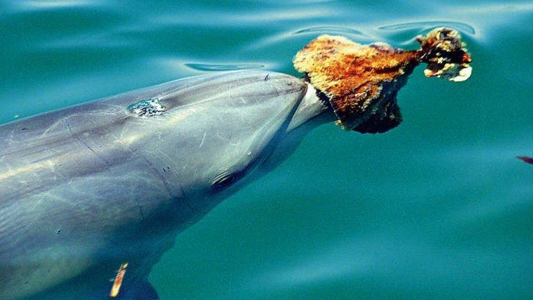 Los delfines del índico-pacífico pueden usar esponjas como herramientas deprotección
