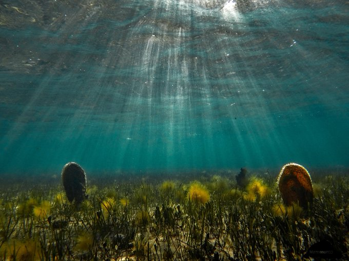 Mar Menor: crónica de una muerteanunciada