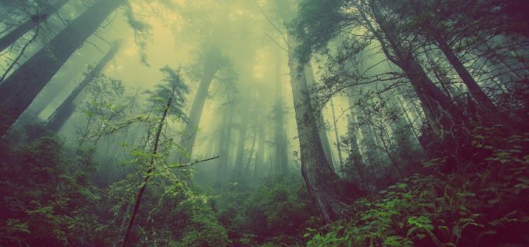 Así muere el bosque más grande del planeta | madrimasd / Los biomas-LaTaiga