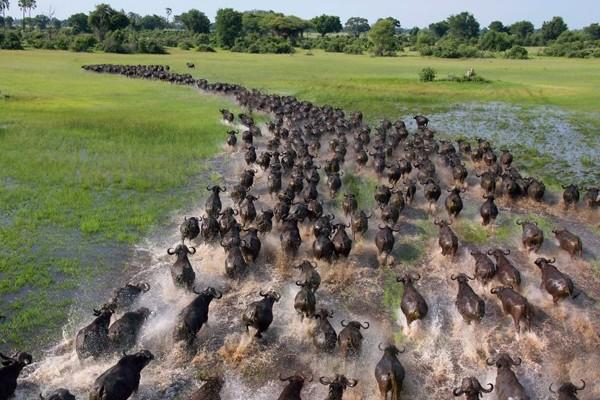 """""""Los animales que migran viven rápido y mueren jóvenes"""" –Madrimasd"""