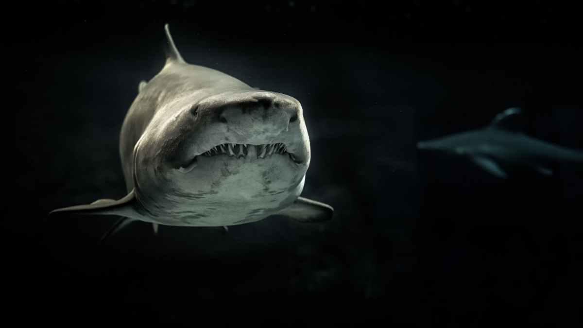 Los tiburones y la contaminación marina, una amenaza para su conservación y nuestrasalud