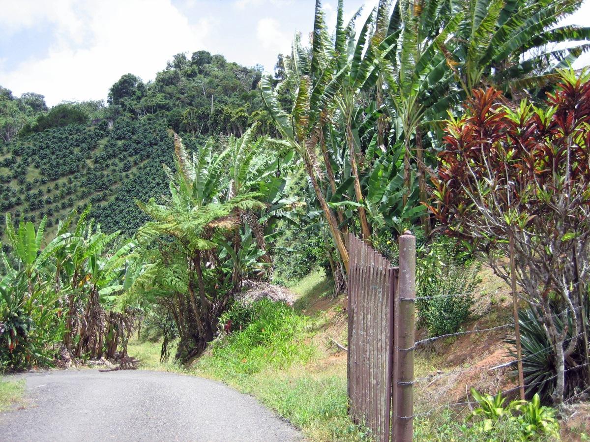 Perspectiva del mercado agrícola y sus oportunidades en PuertoRico